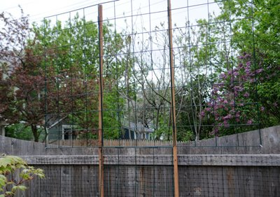 Garden Grids For Tall Trellises Tall Trellis For Clematis