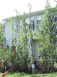 House Grown From Plants on cut house, led house, flooded house, shot house, ground house, felt house, frozen house, roc house, a class house, read house,