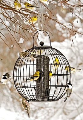 Feed the birds when the garden is dormant
