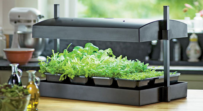 Grow Lettuce Indoors With My Greens Light Garden