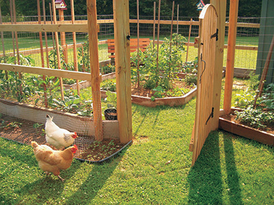 Wood and wire fence with gate keeps chickens out of garden
